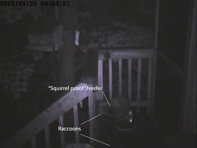 raccoons vs feeder 2